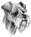 Schnauzer Personalised Greetings Card